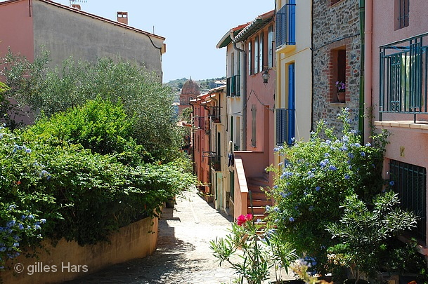 020 collioure pvendres banyuls.JPG